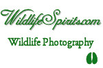 Wildlife Spirits.com  Wildlife Photography and Free Screen Saver